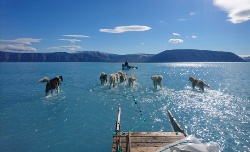 A team of dogs pull a sledge through bright blue water