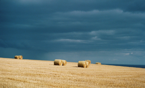 Golden hay bales against a blue sky